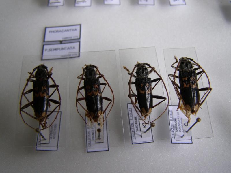 Présentation des collections Entomologiques - Page 7 P1010210
