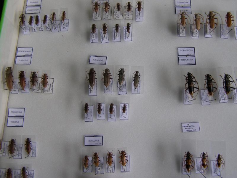 Présentation des collections Entomologiques - Page 7 P1010211