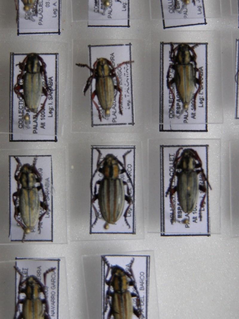 Présentation des collections Entomologiques - Page 7 P1010214