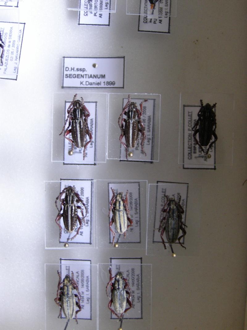 Présentation des collections Entomologiques - Page 7 P1010215