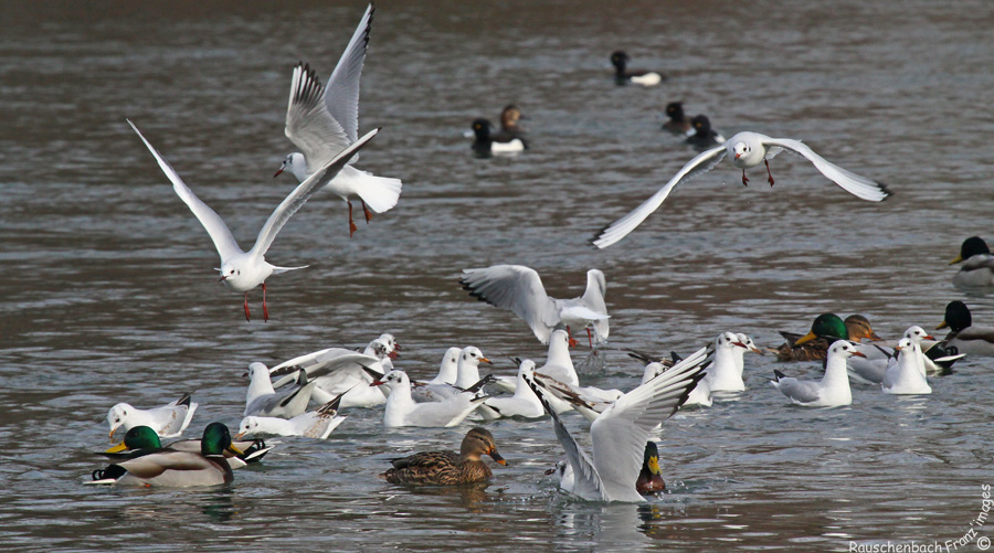 Animaux, oiseaux... etc. tout simplement ! - Page 40 Img_6410
