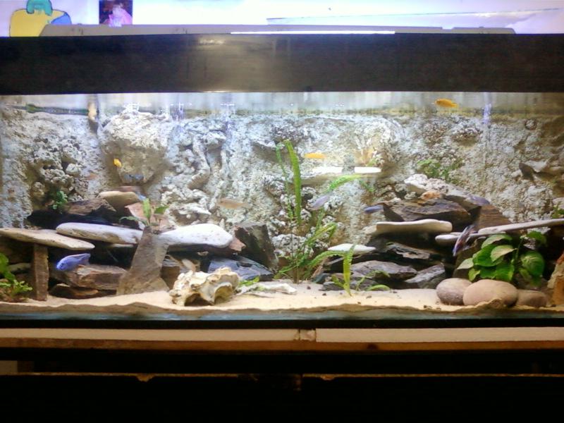 aquariums draco53 - Page 3 Photo-10