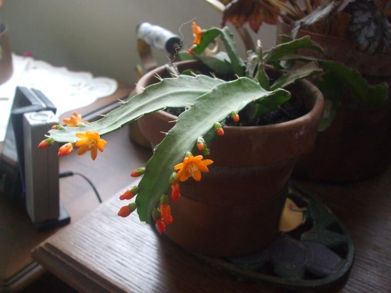 mes fleurs... 003_1610