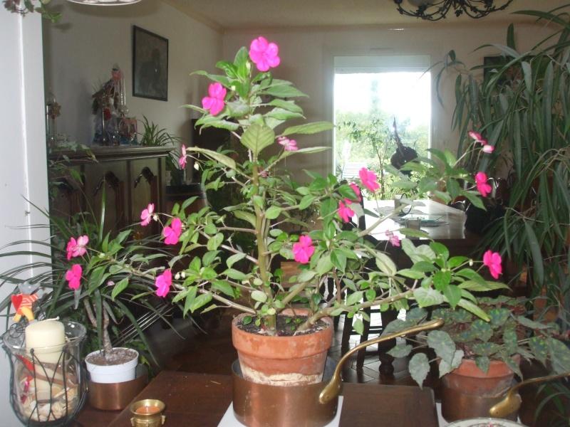 mes fleurs... 014_1510