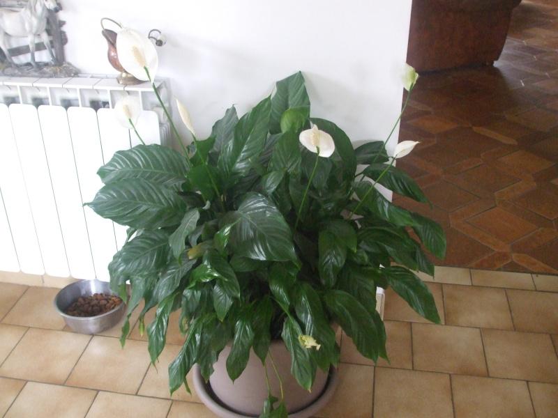 mes fleurs... 015_710
