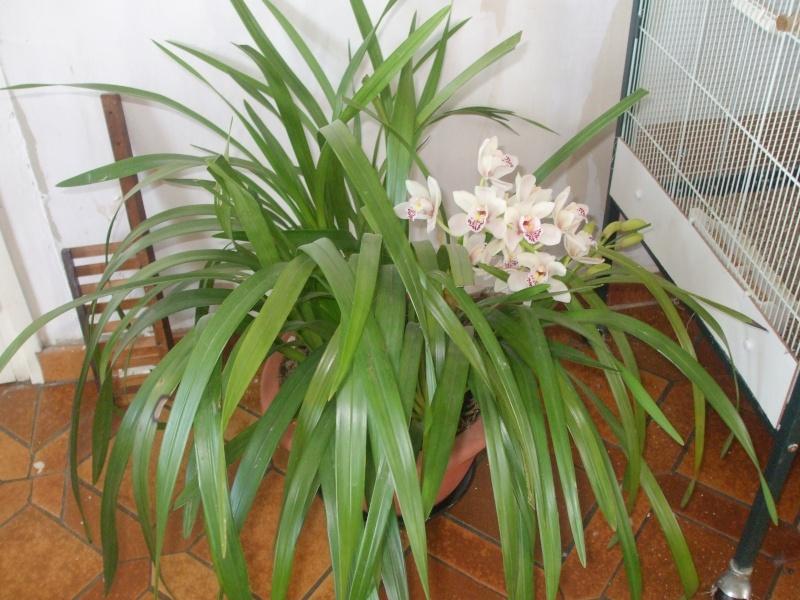mes fleurs... Dscf1110