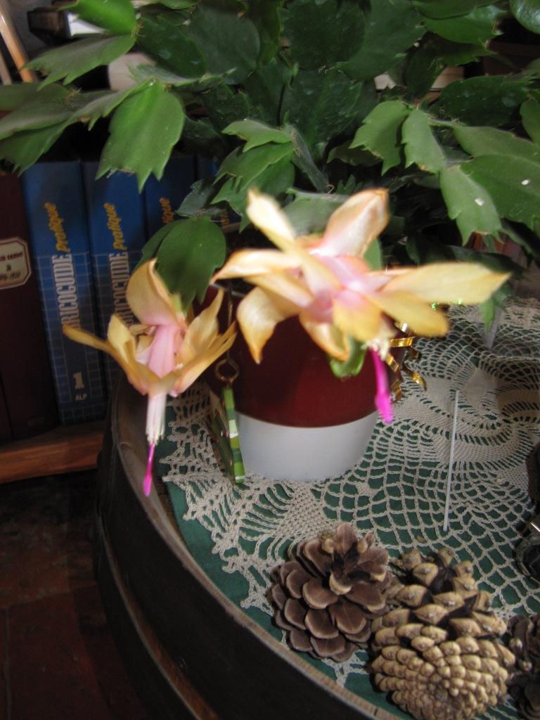 en fleur  00314