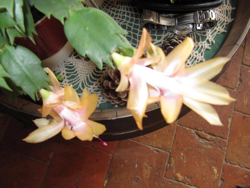 en fleur  00413