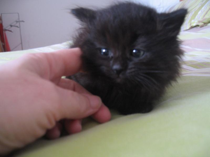 Jingle,chaton angora mâle né le 20 mars  10_mai11