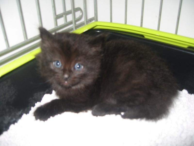 Jingle,chaton angora mâle né le 20 mars  Jingle22