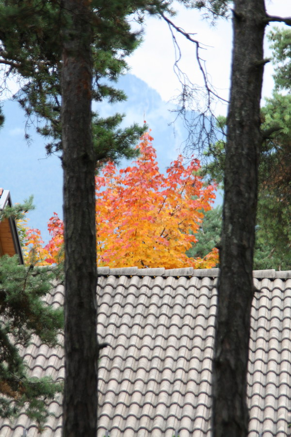 scènes d'automne - saison 2013 Img_0010