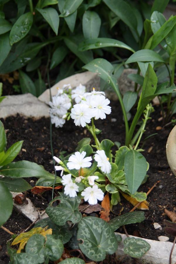 doly - jardin vu d'un transat Img_8013