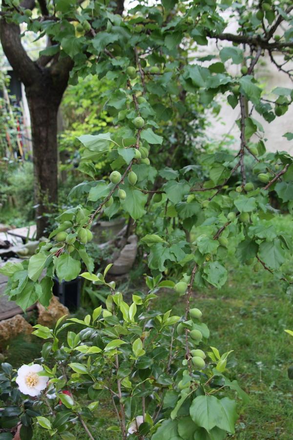 doly - jardin vu d'un transat Img_8015