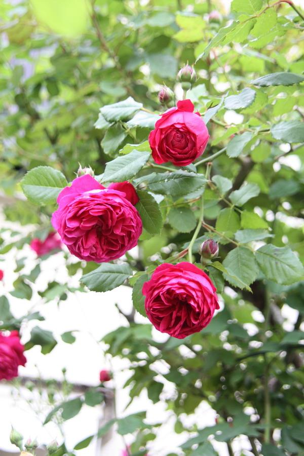 doly - jardin vu d'un transat Img_8018