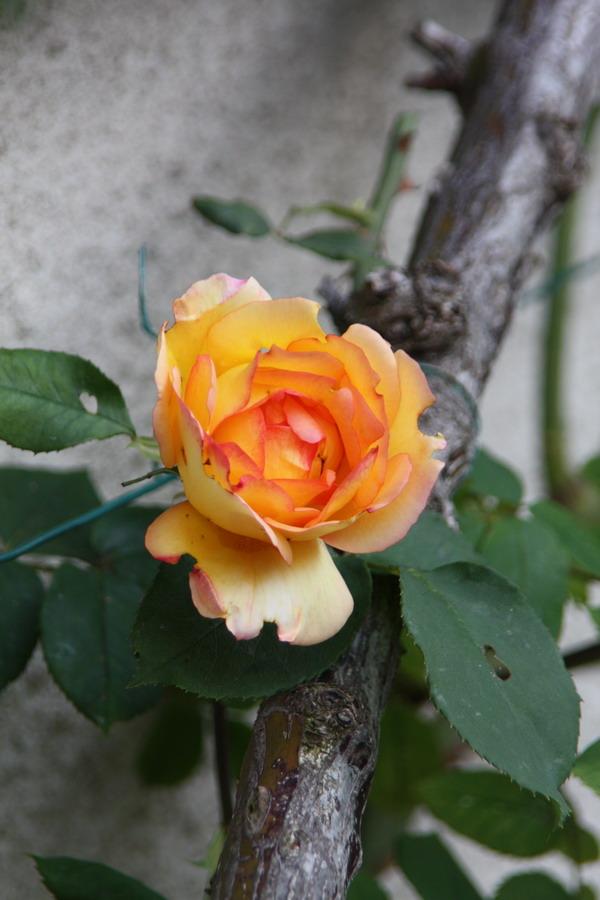 doly - jardin vu d'un transat Img_8019