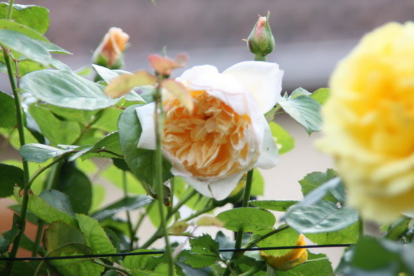 doly - jardin vu d'un transat Img_8021