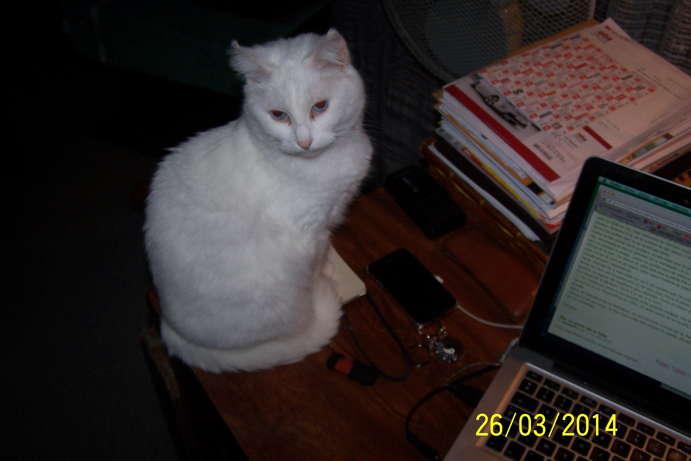 Ohé, petite chatte sourde - Page 11 100_5910
