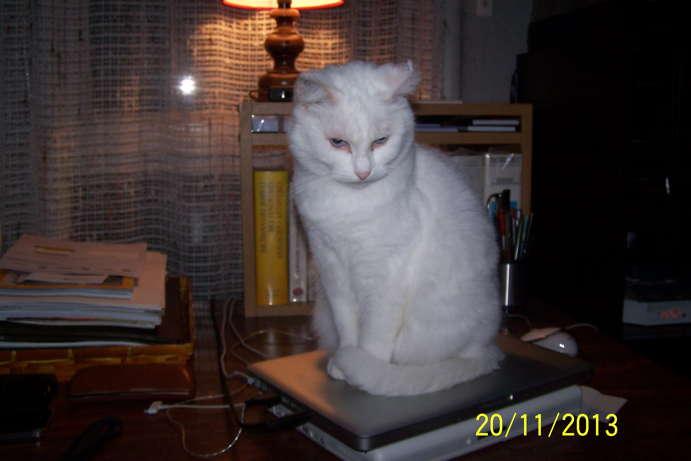 Ohé, petite chatte sourde - Page 11 100_5911