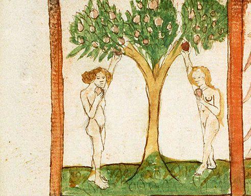 Une brève histoire de la pomme Adam_e10