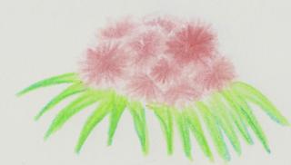 La flore Numari11