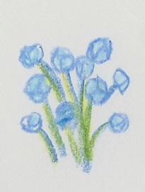 La flore Numari14