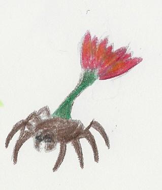 La flore Numari15