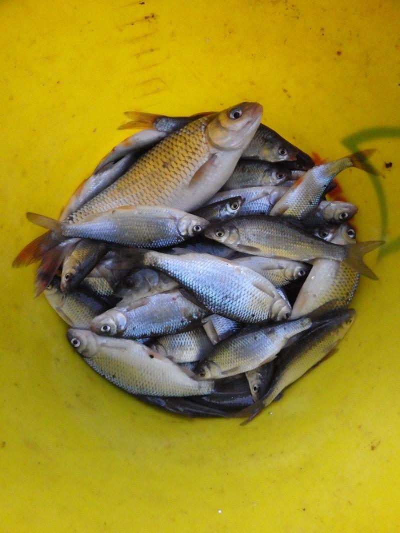 où qu'y sont les p'tits poissons ???  Imgp0424