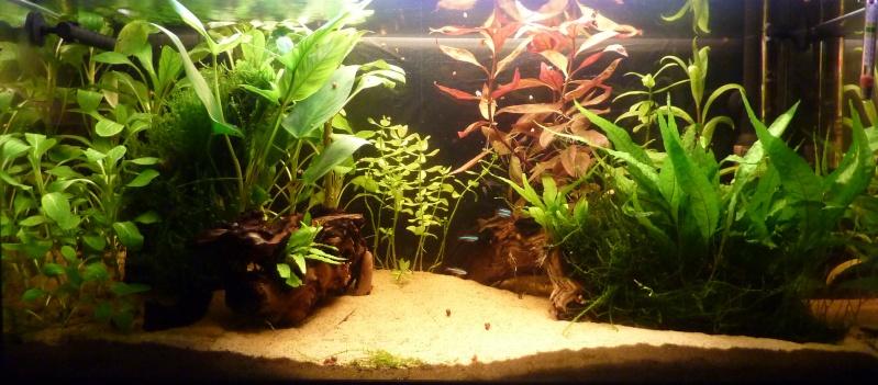 100 litres planté - Page 3 Bbbb10