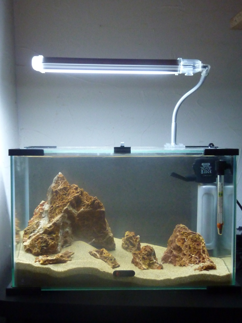 """20 litres """"type"""" aquascaping [FIN] - Page 5 P1150511"""