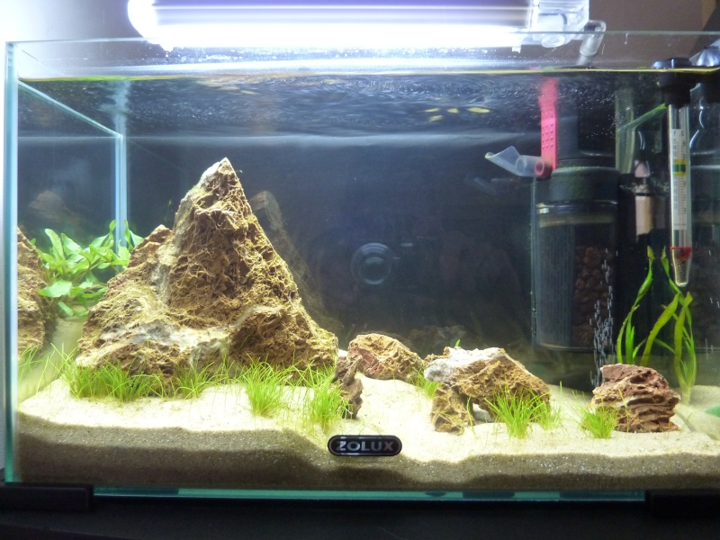 """20 litres """"type"""" aquascaping [FIN] - Page 2 P1150810"""