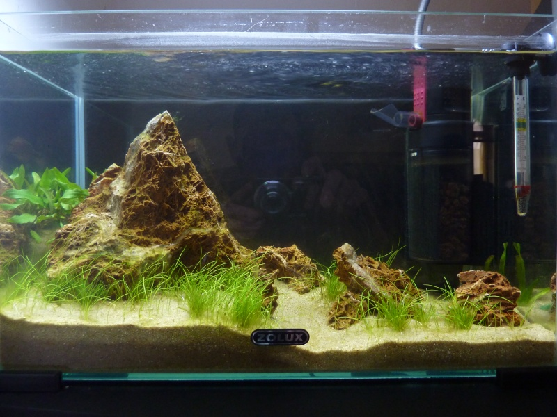 """20 litres """"type"""" aquascaping [FIN] - Page 2 P1160011"""