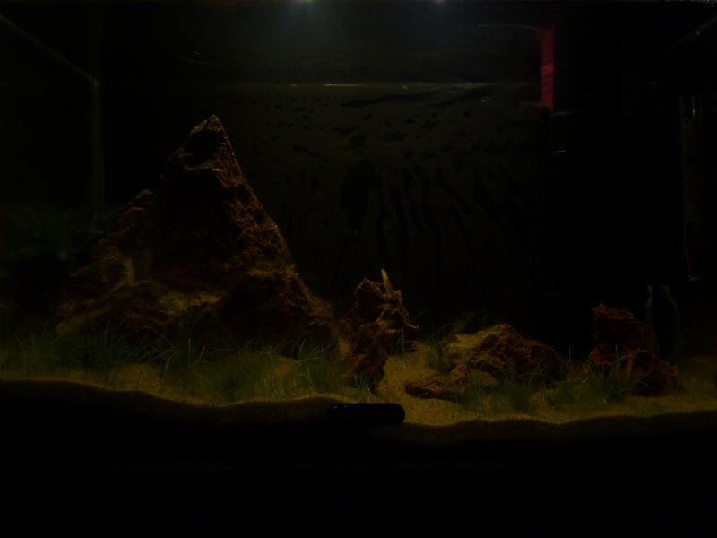 "20 litres ""type"" aquascaping [FIN] - Page 3 P1160310"