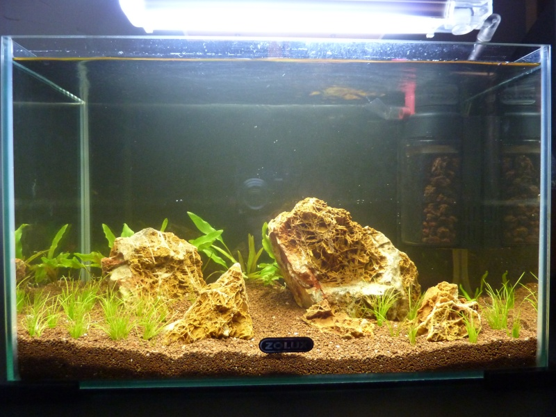 """20 litres """"type"""" aquascaping [FIN] - Page 4 P1160516"""