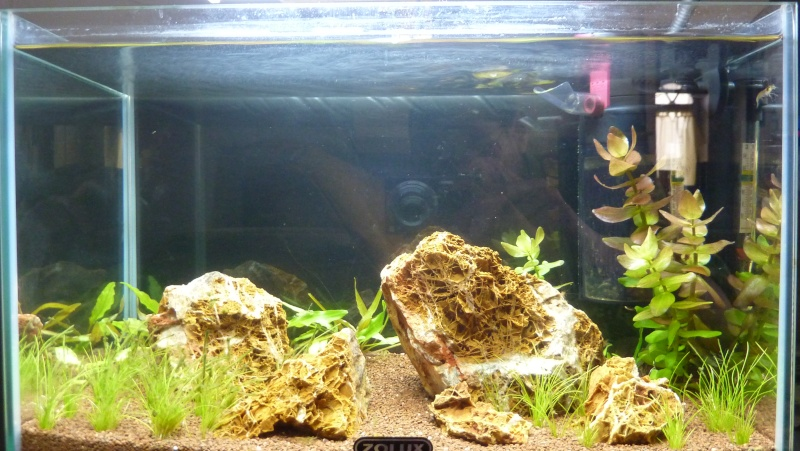 """20 litres """"type"""" aquascaping [FIN] - Page 4 P1160723"""