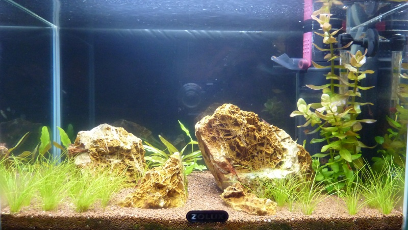 """20 litres """"type"""" aquascaping [FIN] - Page 5 P1170212"""