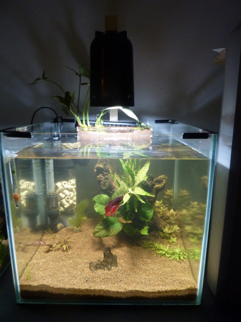 55 litres betta - Page 4 P1170725