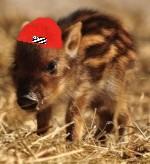 Un bonnet rouge pour Mazout ! 2-2910