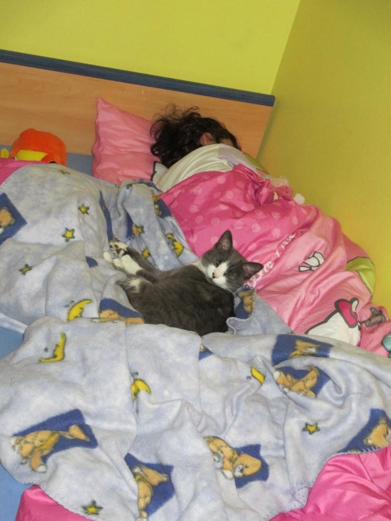 Mystère chaton femelle 5 mois adoptée  par VIRGINIE ( 79 ) Img_1610
