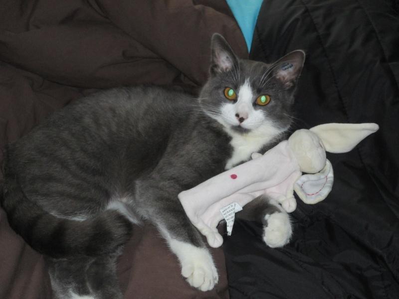 Mystère chaton femelle 5 mois adoptée  par VIRGINIE ( 79 ) Img_1611