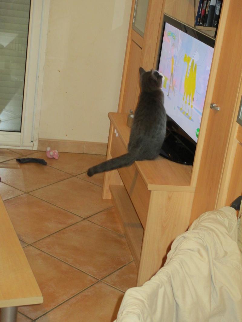 Mystère chaton femelle 5 mois adoptée  par VIRGINIE ( 79 ) Img_1710