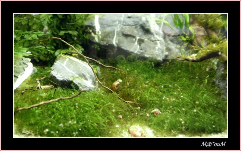 Fan de mousses aquatiques [Liste et photos] - Page 2 _mg_1111
