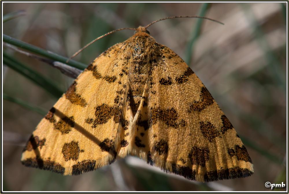 Identification papillon (04) Papill10
