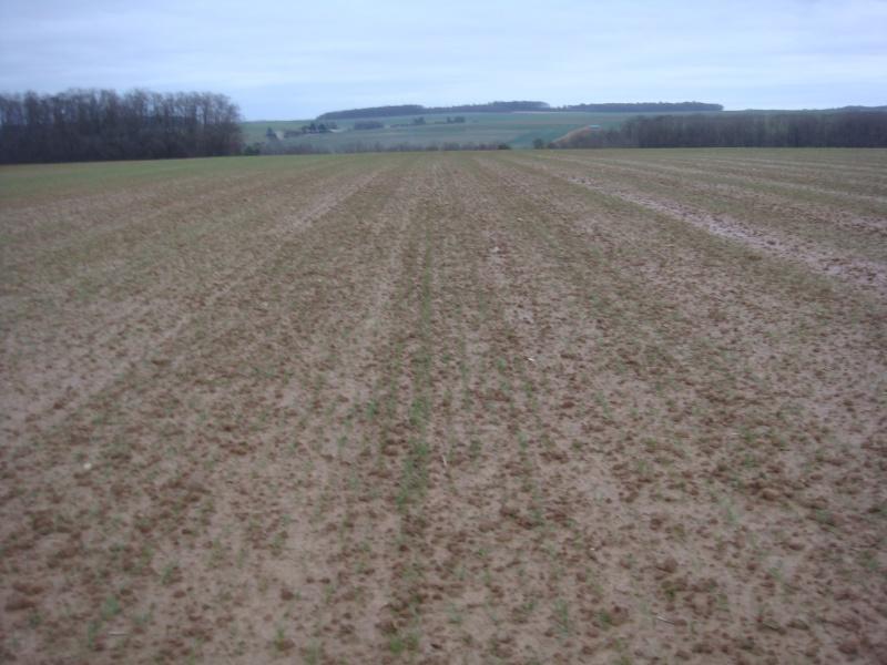 semis de blé 2013-2014 - Page 20 Dsc00536