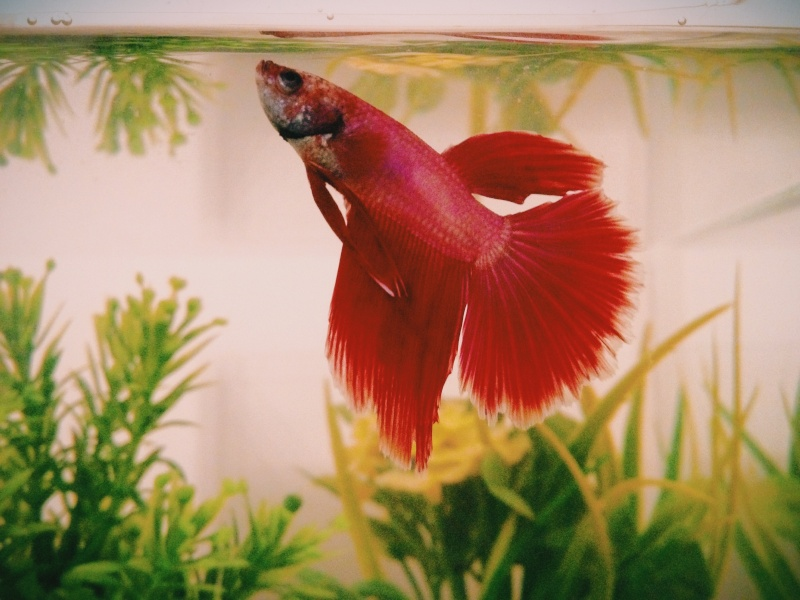 1er aquarium Photo_11