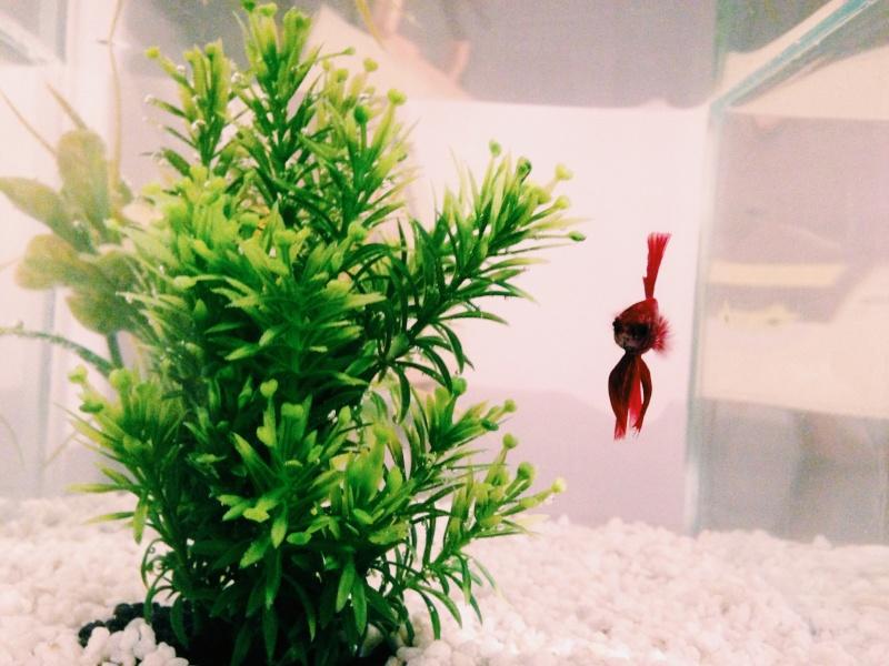 1er aquarium Photo_12