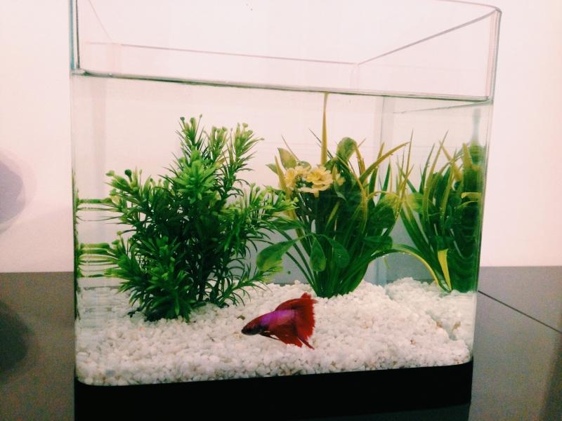 1er aquarium Photo_13