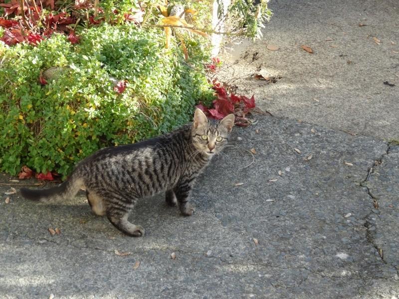 IRMA chaton femelle 10/06/2013 adoptée par jennifer  ( 85 ) Dsc05910