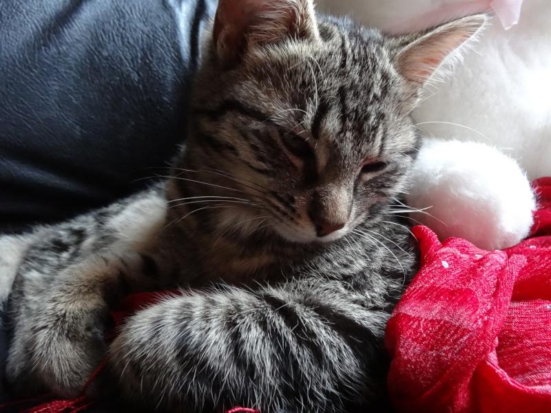 IRMA chaton femelle 10/06/2013 adoptée par jennifer  ( 85 ) Dsc06110