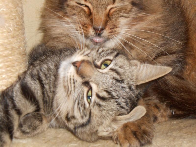 IRMA chaton femelle 10/06/2013 adoptée par jennifer  ( 85 ) Dscn0011