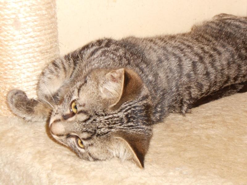IRMA chaton femelle 10/06/2013 adoptée par jennifer  ( 85 ) Dscn0012